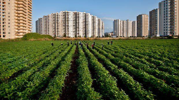 Türkiye'de 10 yılda ne kadar tarım arazisi yok oldu?