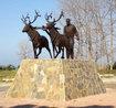 600 yıllık efsane, Geyikkoşan Olimpiyat Kampı ve Turizm Alanında yaşayacak!