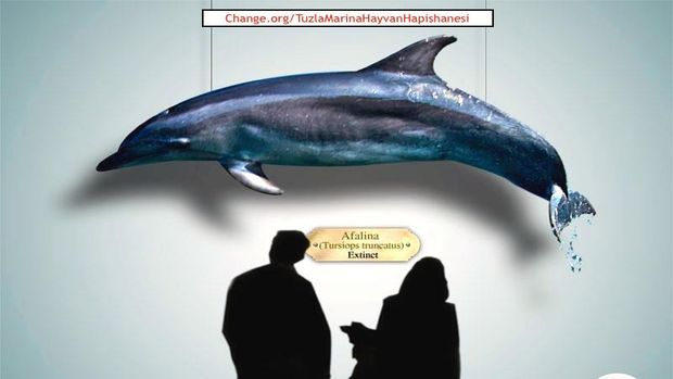Tuzla Marina ve AVM Projesinde yunus parkı ve hayvanat bahçesine karşı imza kampanyası!