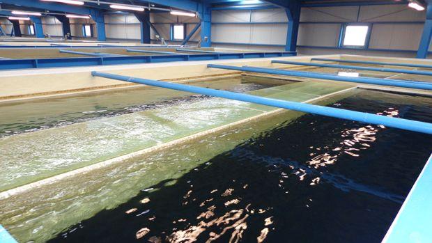 Saski Bafra İçme Suyu Projesi Bu Yılsonu Bitiyor