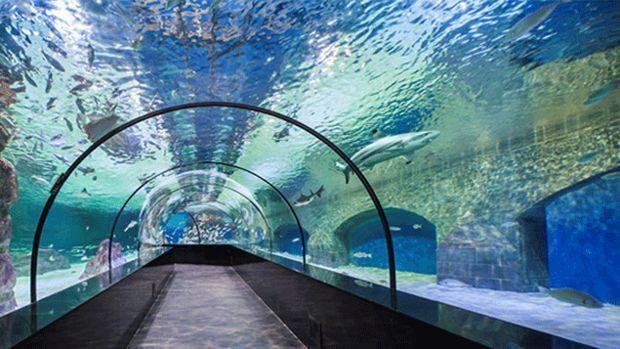 Trabzona Tünel Akvaryum Geliyor