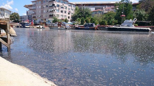 Kadıköy Kurbağalıdere Ağustos'tan Sonra Temiz Bir Sayfa Açıyor