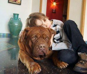 Apartmanda Köpek Bakmak Yasak Mı?